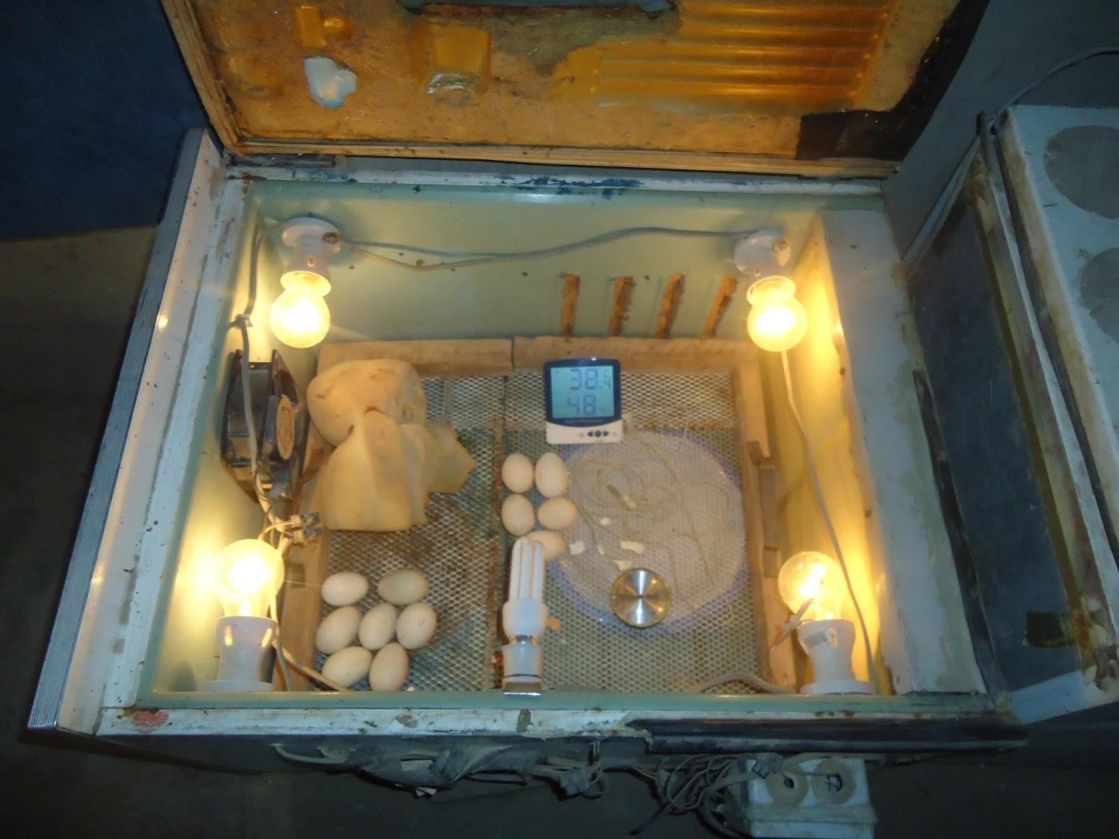 Espace de stockage : pour vous aliments, il faut une chambre froide